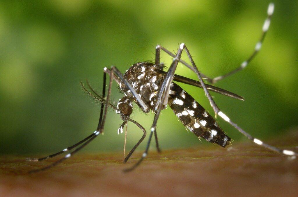 Mosquito-borne diseases